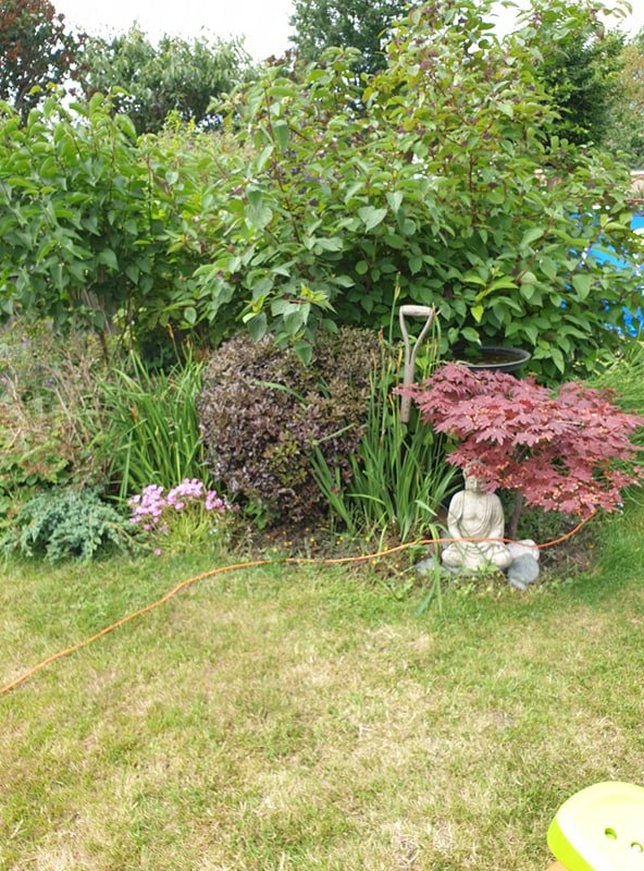 disability and gardening