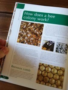Haynes Bee Manual