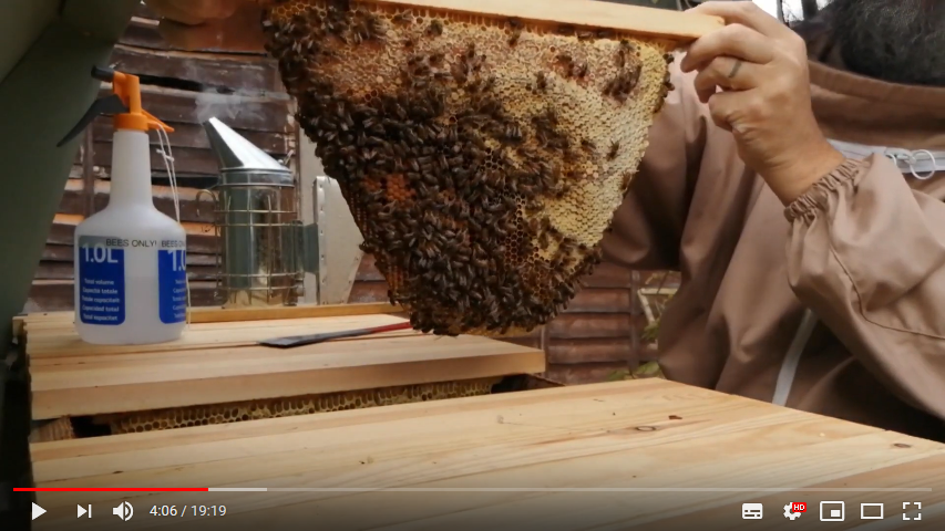 Top Bar Hive comb with capped honey
